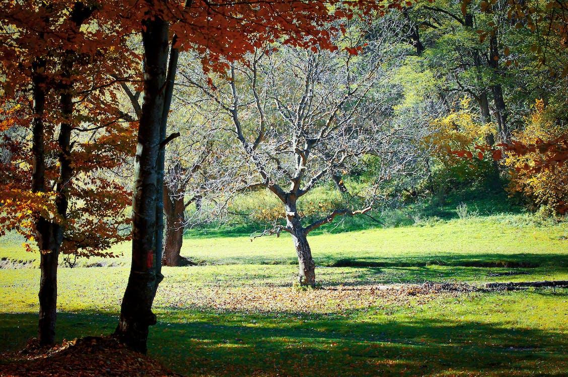 계절, 나무, 다채로운