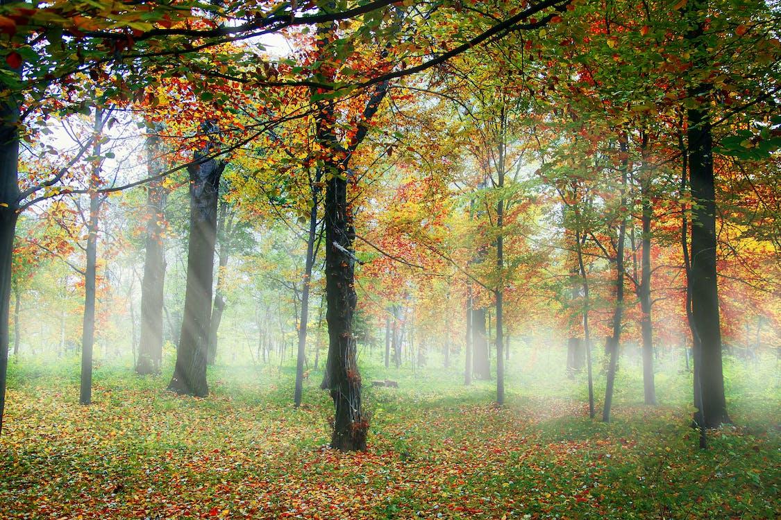 farver, farverig, natur