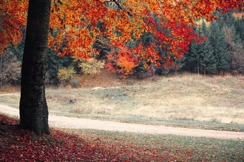Free stock photo of colorful, colors, forest, natural