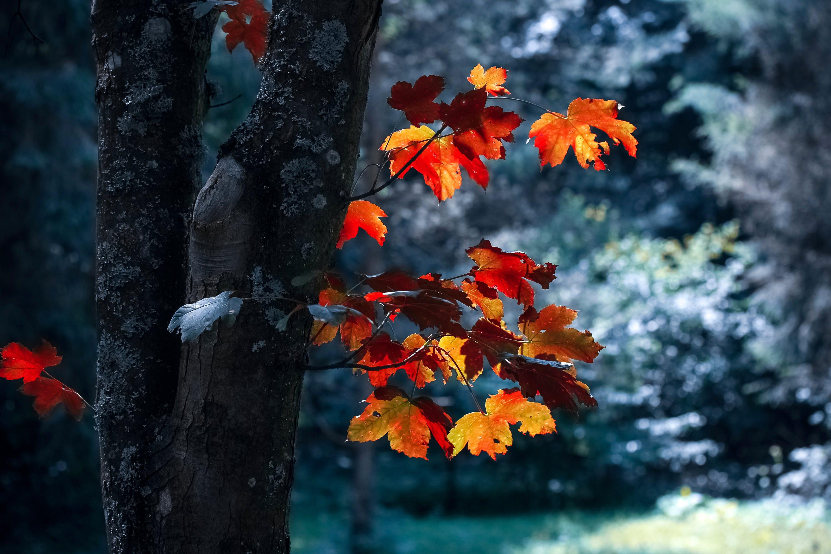 autumn, autumn leaves, blur