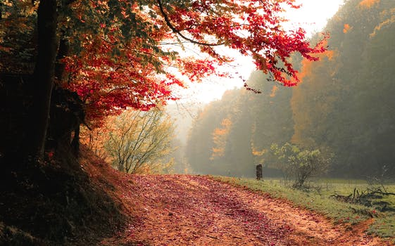 Free stock photo of road, nature, trees, fog