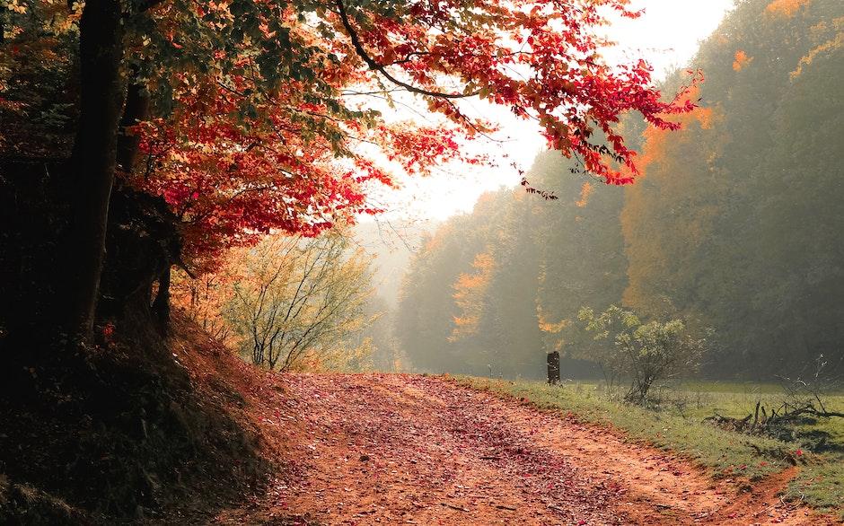autumn, daylight, fall