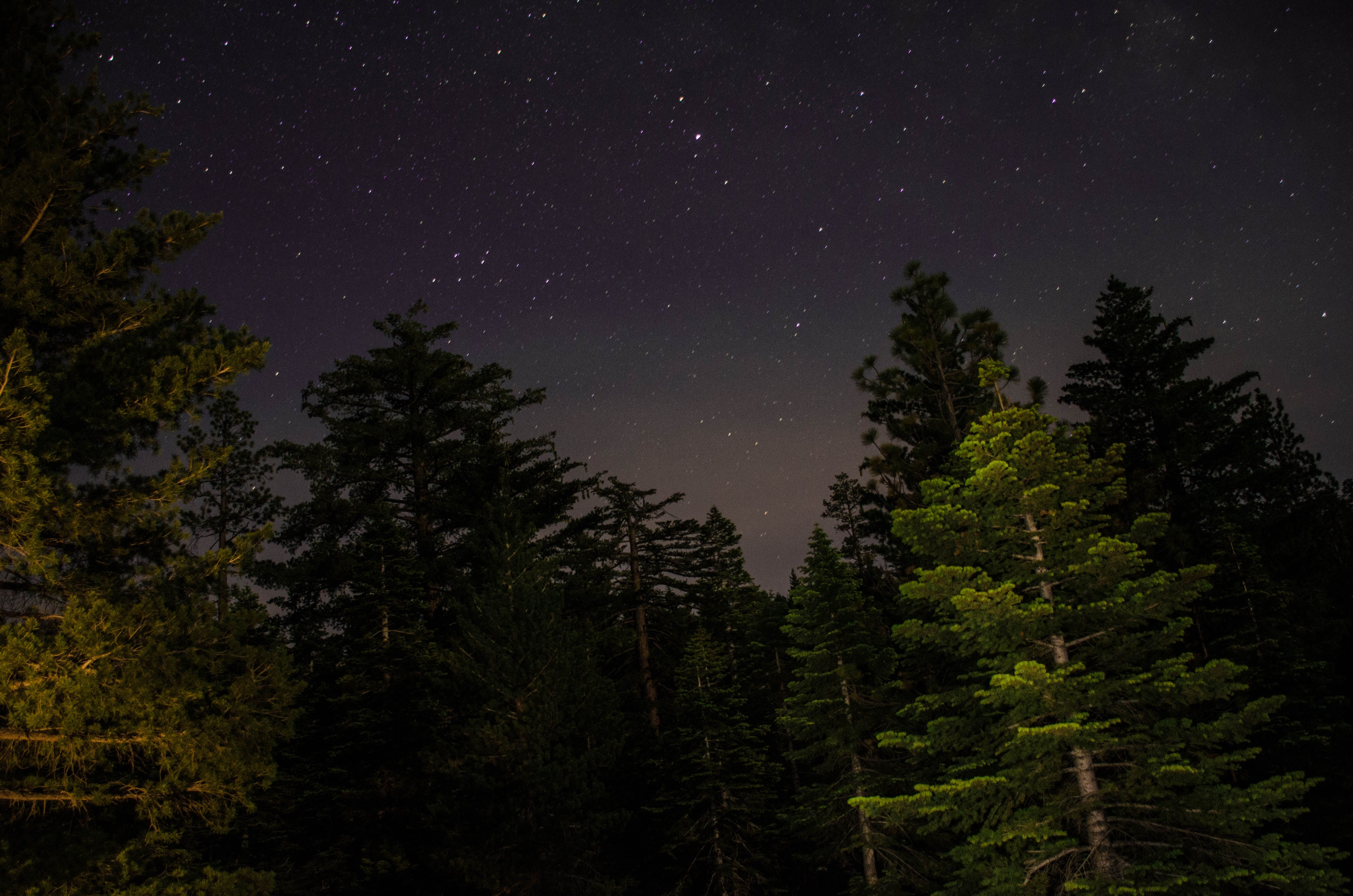 Royalty free images of nature, sky, night, forest