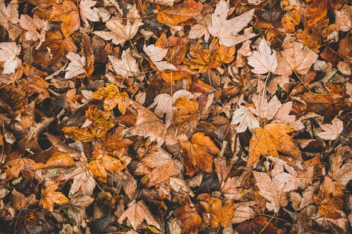 From above of fallen dry orange and brown leaves scattered on ground in fall in daylight