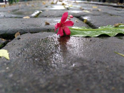 çiçek, çiçekli duvar kağıdı, doğa duvar kağıdı, dökülmüş yapraklar içeren Ücretsiz stok fotoğraf