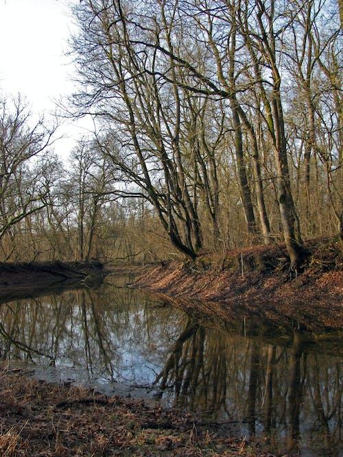 Free stock photo of reflection, still life, trees