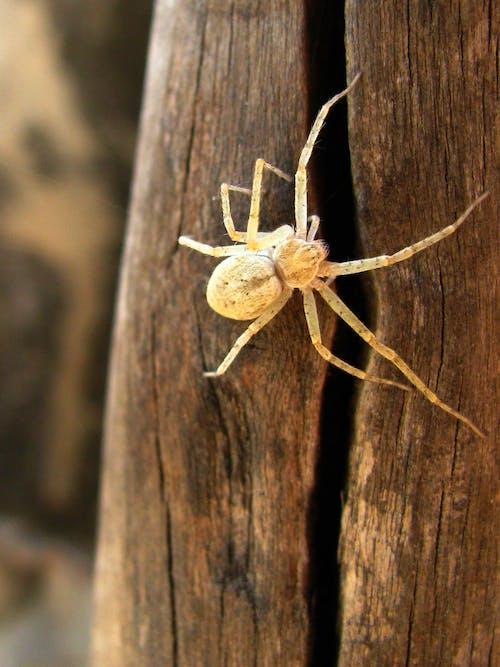 Free stock photo of spider, web, white