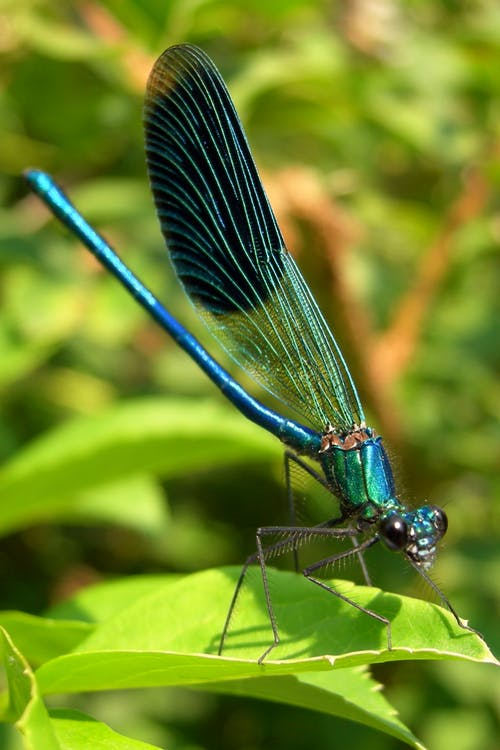 Free stock photo of dragonfly, green, summer
