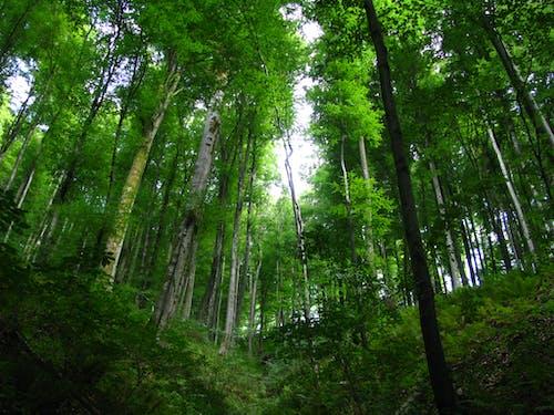 Photos gratuites de forêt, nature, perspective, vert