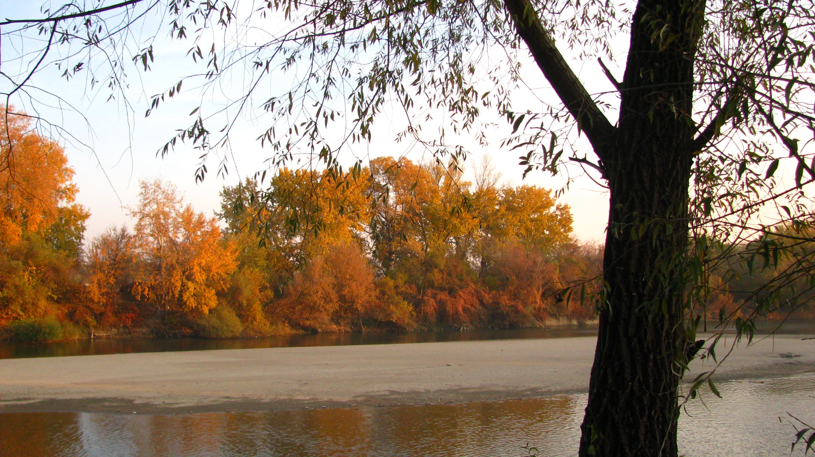 Free stock photo of autumn, fall, river, rust