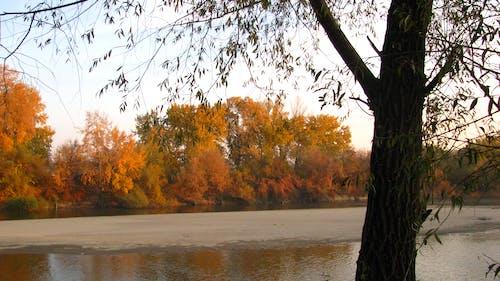Photos gratuites de arbre, bois, rouille