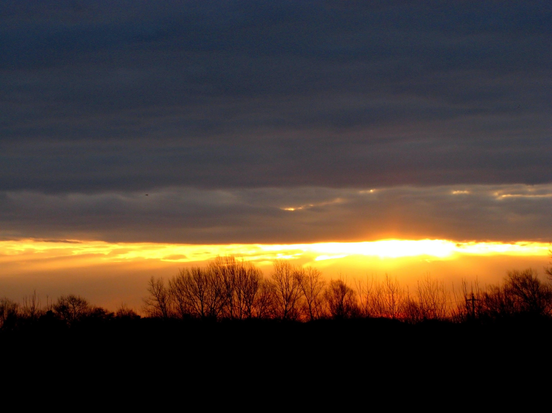 Free stock photo of horizon, shadows, sunset, trees