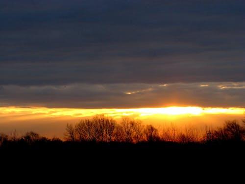 Photos gratuites de arbres, coucher de soleil, horizon, ombres