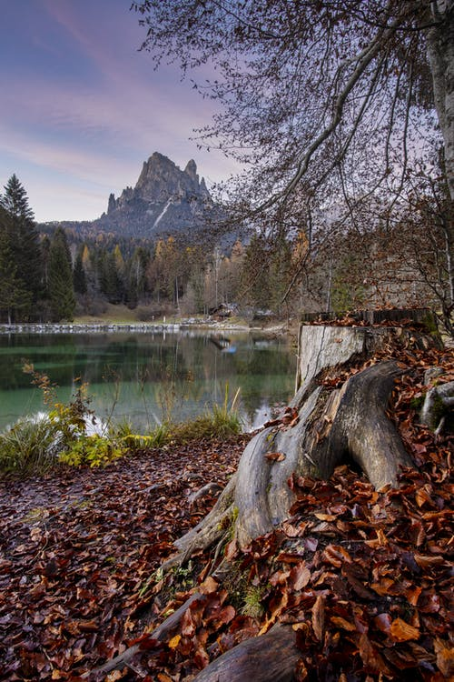 Brown Tree Trunk on Lake