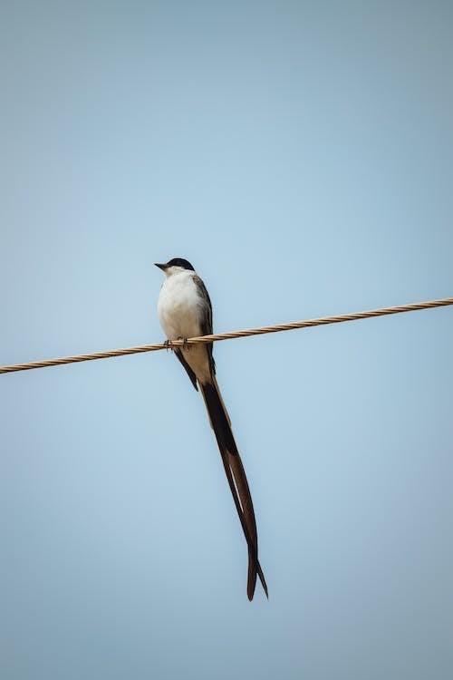 Pájaro Posado Sobre Alambre En Altura