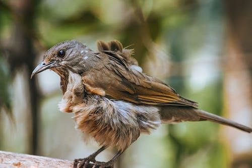 Bird sitting on branch in forest