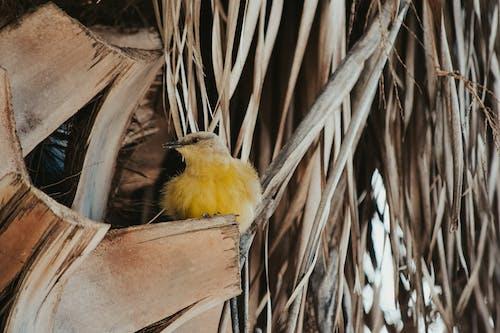 Small bird on gazebo in park