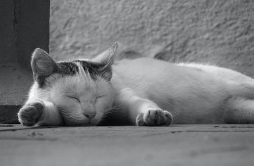 Photos gratuites de chat, dormir, noir et blanc