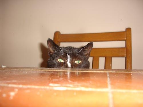 Free stock photo of cat, cat foster, cat rescue