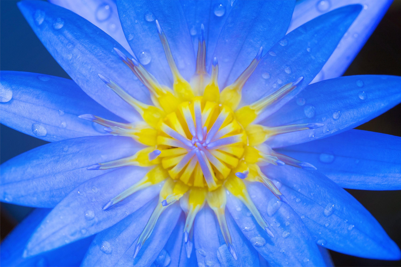 blue yellow petaled flower  u00b7 free stock photo
