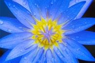 nature, petals, dew