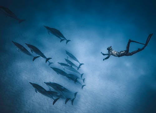 Faceless diver swimming deep underwater near flock of dolphins