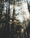nature, forest, trees