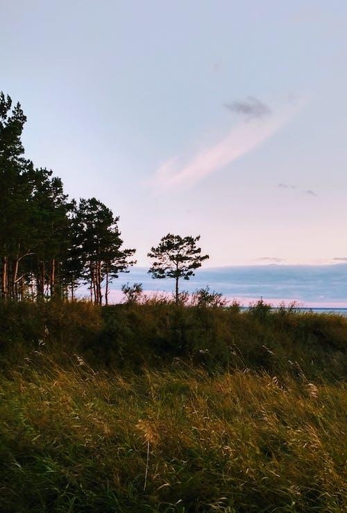 açık, açık hava, ağaç içeren Ücretsiz stok fotoğraf