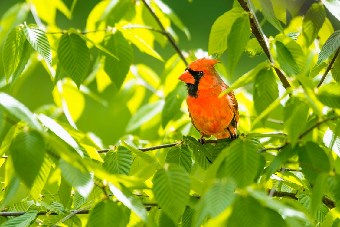 Red and Yellow Bird on Tree Branch
