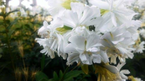 Free stock photo of flower, gà l, umarjon
