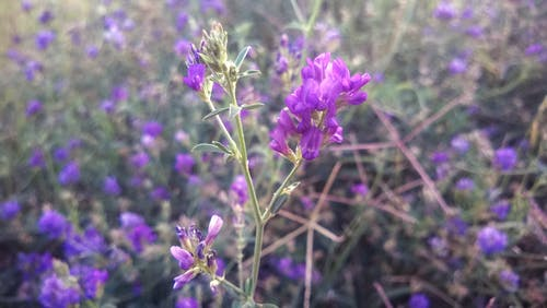 Free stock photo of beda, field, field of flowers