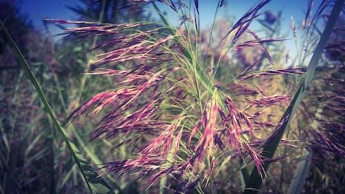 Free stock photo of field, gà l, nature