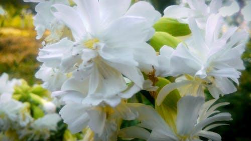 Free stock photo of flower, nature, umarjon
