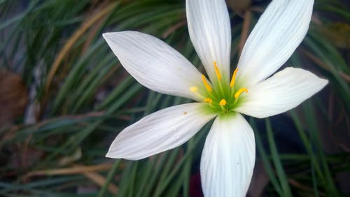 Free stock photo of flower, gà l, nature