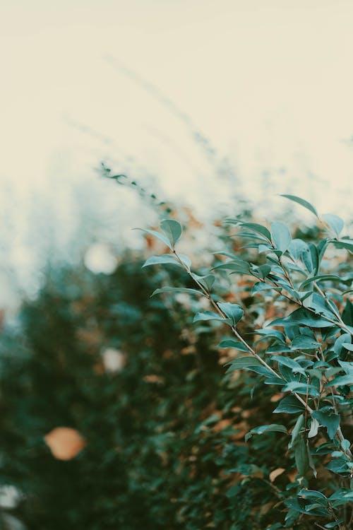 Бесплатное стоковое фото с ветвь, дерево, дождь, зеленый