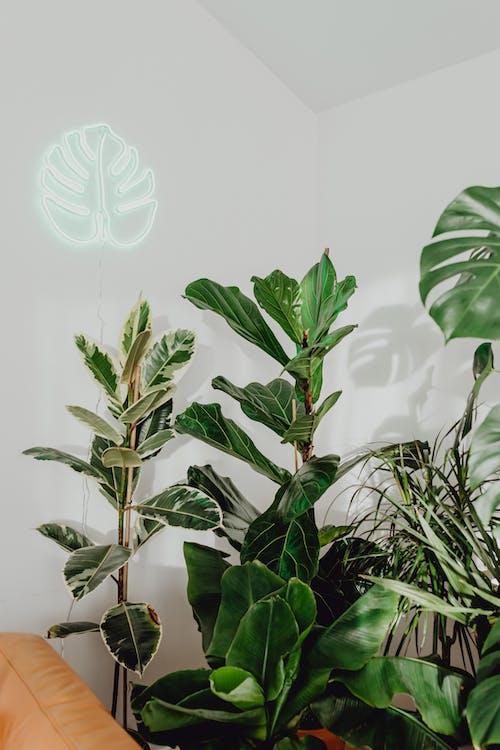 Assorted Indoor Plants