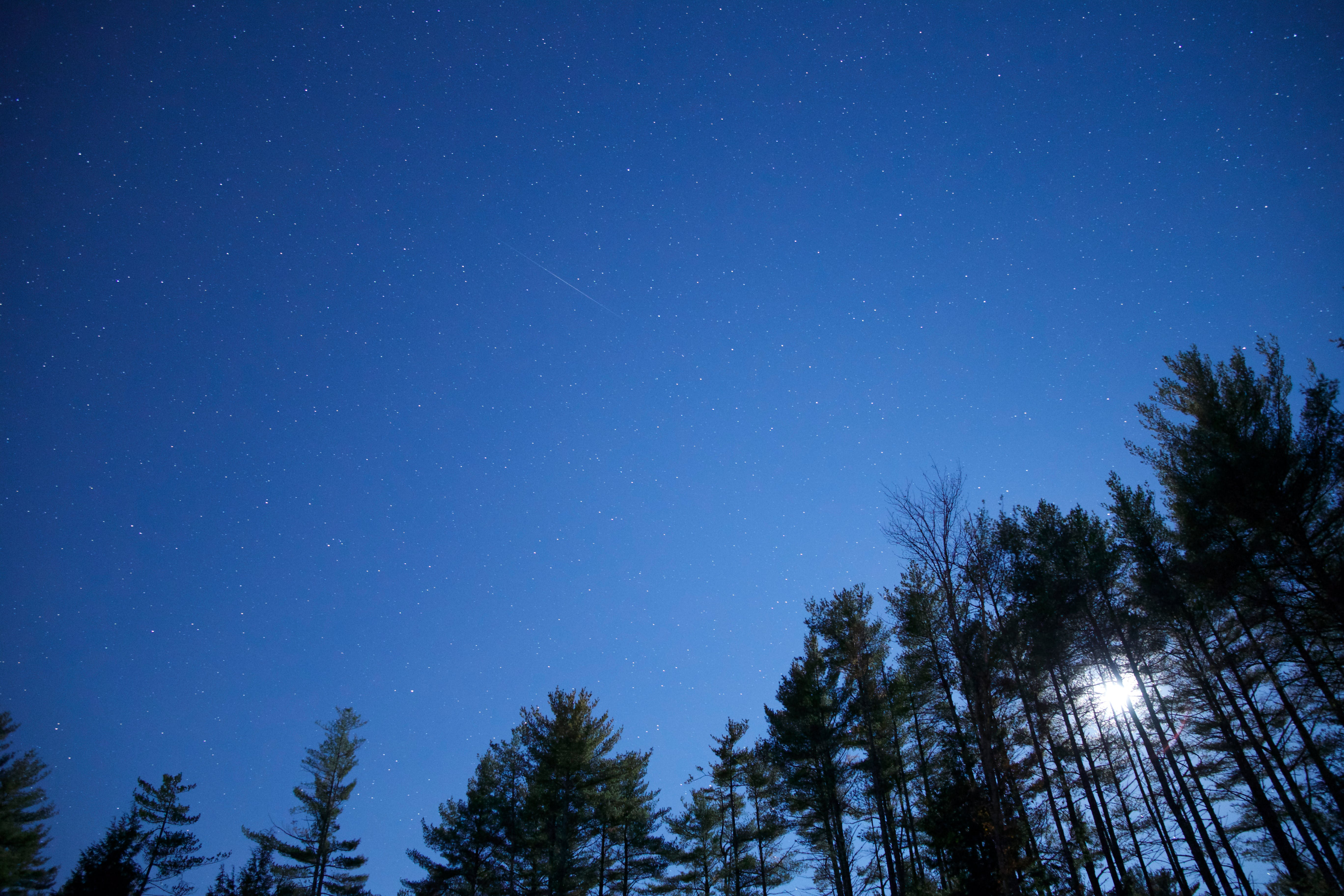 Worm's Eye View of Green Trees Under Blue Clear Night Sky