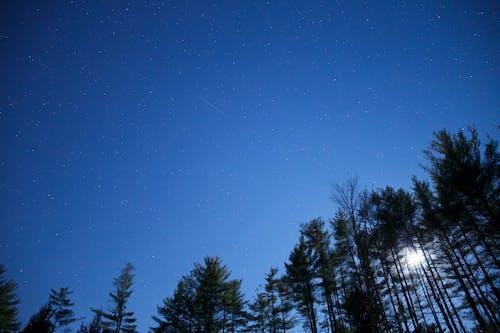 Základová fotografie zdarma na téma hvězdy, noc, obloha, příroda