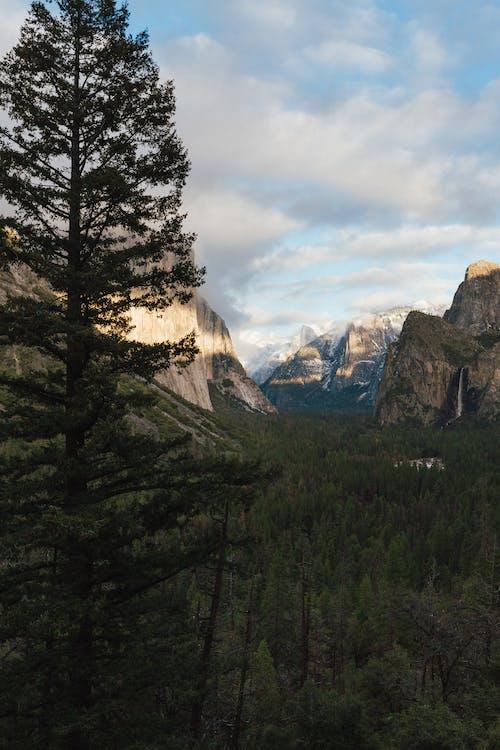 Бесплатное стоковое фото с HD-обои, варварский, вечнозеленый, вид на горы