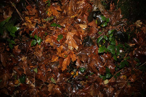 Free stock photo of forest, leaves