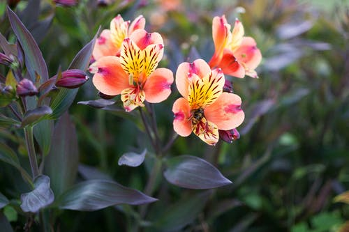 A Bee on the Pink and Yellow Flower