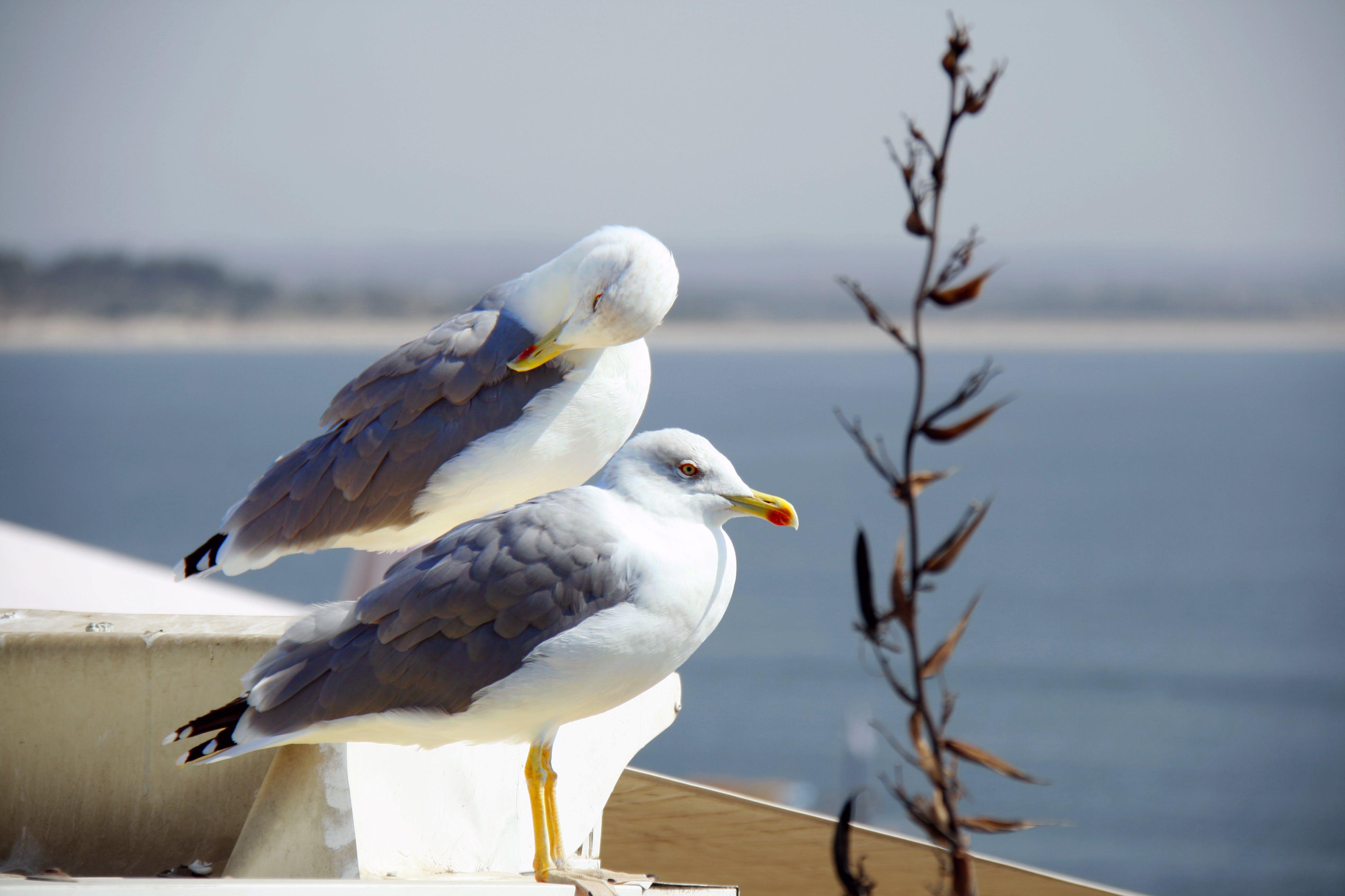 Free stock photo of sea, seagull, water