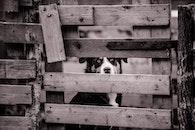 wood, black-and-white, animal