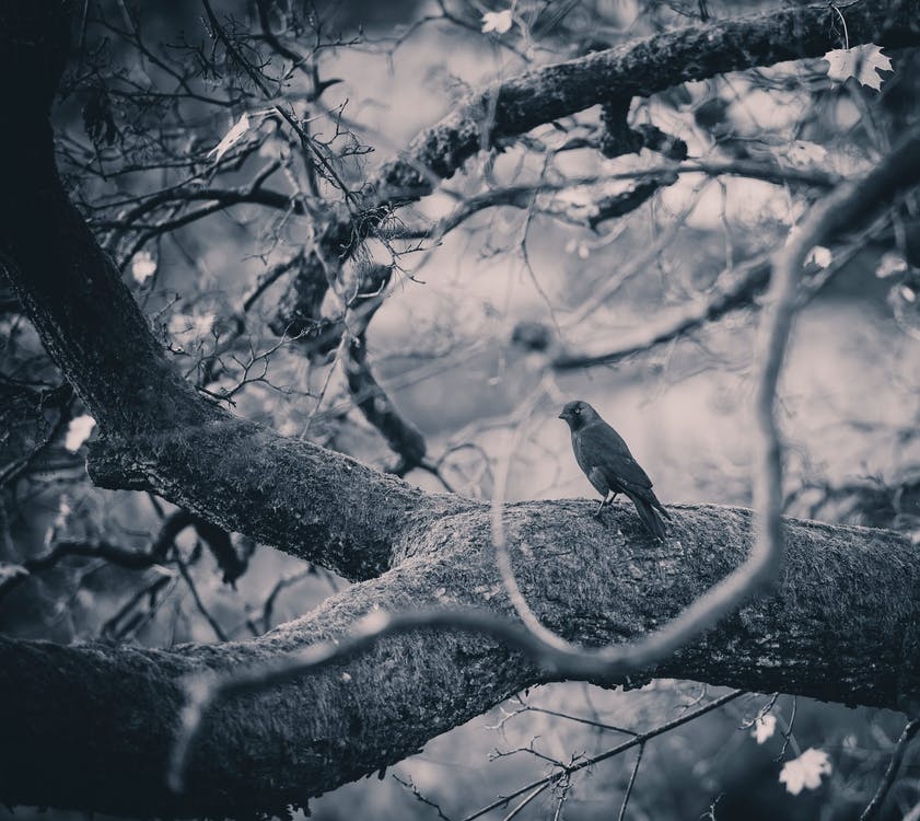 Free stock photo of branch, branches, tree