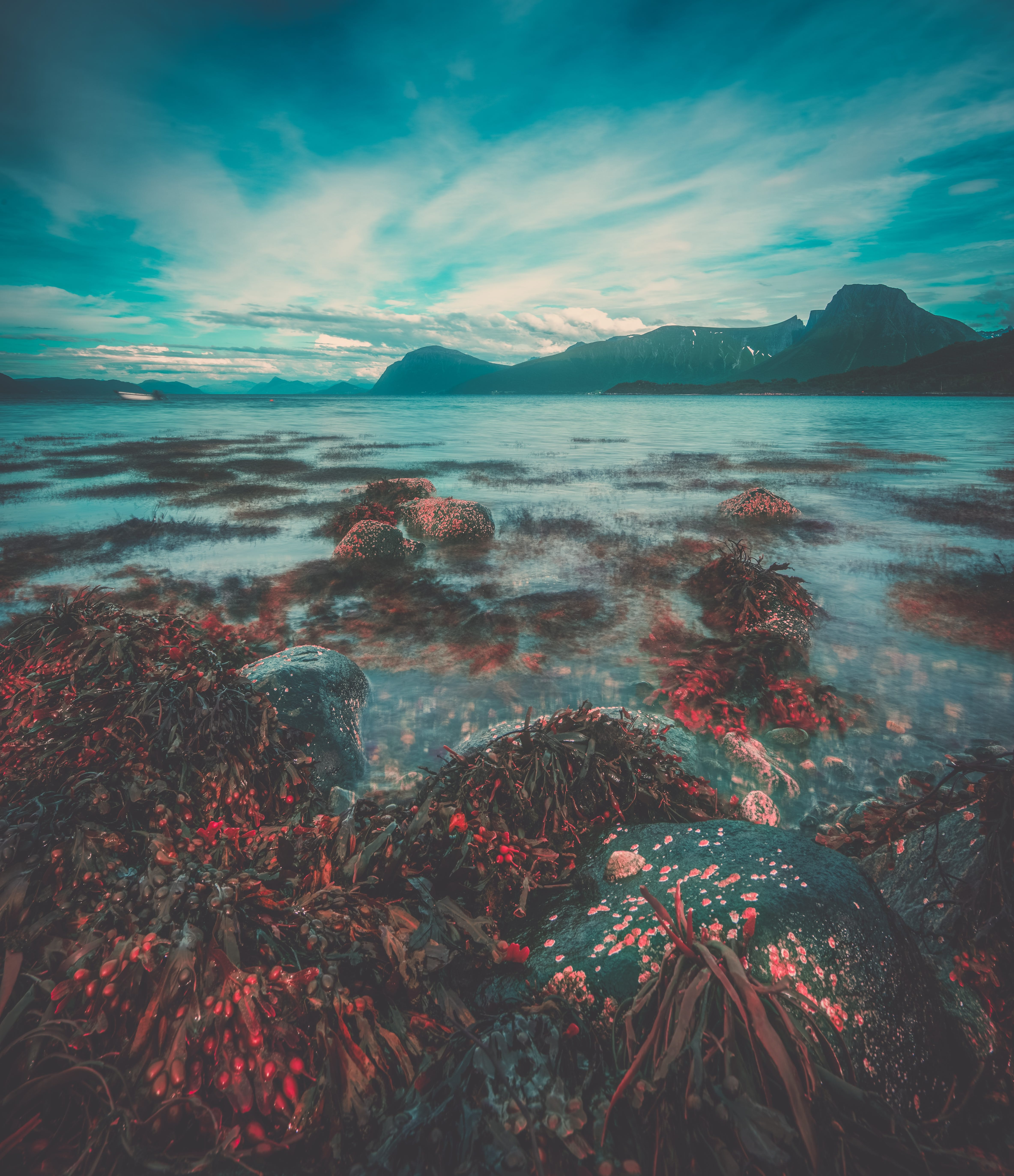 clouds, corals, environment