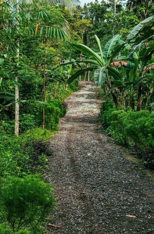 Immagine gratuita di albero, ambiente, armonia
