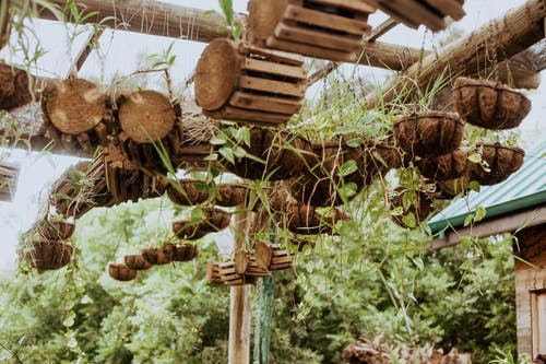From below of coco fiber cache pots and tree logs hanging on wooden planks in backyard of residential house in tropical countryside