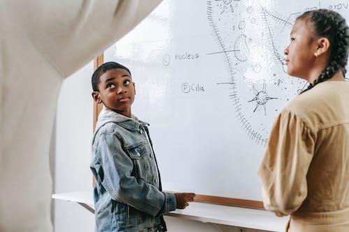 Multiethnic children studying biology and listening teacher near modern whiteboard with scheme of organism in classroom