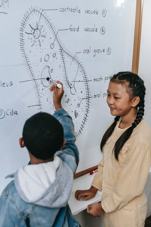 Multiracial smart classmates studying structure of primitive organism on whiteboard while showing scheme