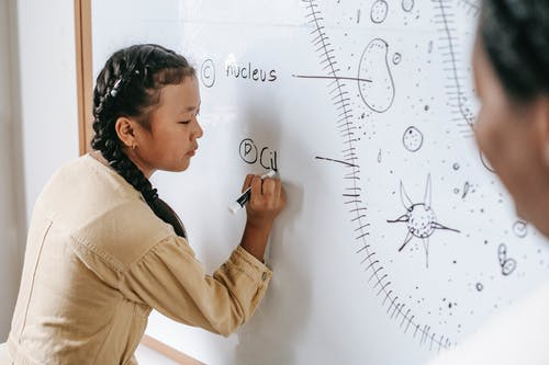 Side view of ethnic schoolgirl holding marker pen and writing on whiteboard during biology lesson in school